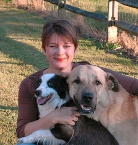 border collie and anatolain shepherd