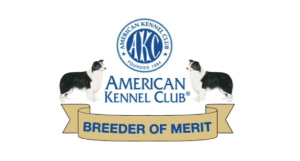 AKC Breeder of Merit Program for Border Collie