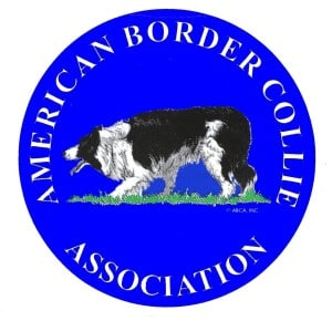 American Border Collie Association