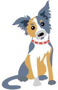 Adopt a Border Collie Puppy from Shadewood Farm