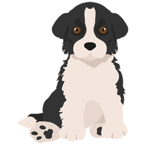 How we Raise our Border Collie Puppies