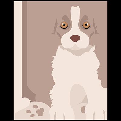 Light brown border collie puppy