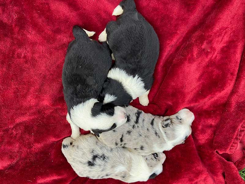 Munch and Sloan Pups - Boys - July 2021