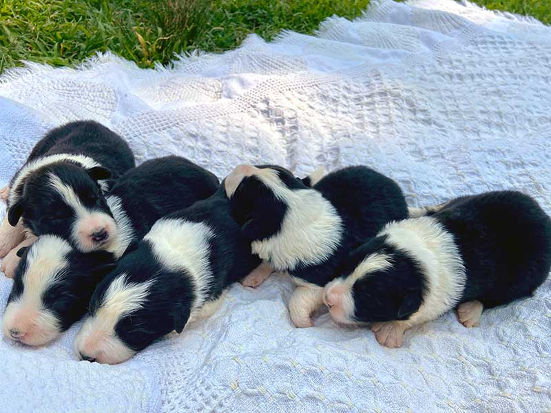 Suzy and Sloan Pups - Boys - June 2021