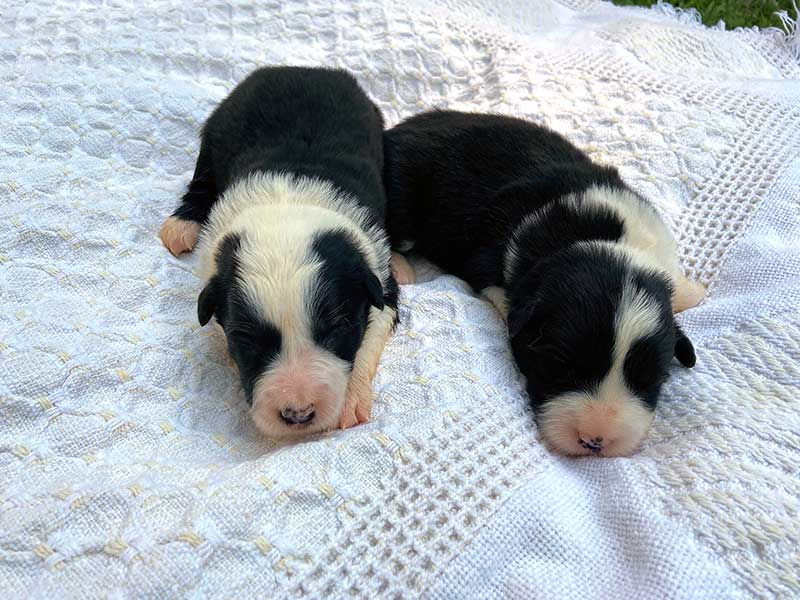 Suzy and Sloan Pups - Girls - June 2021